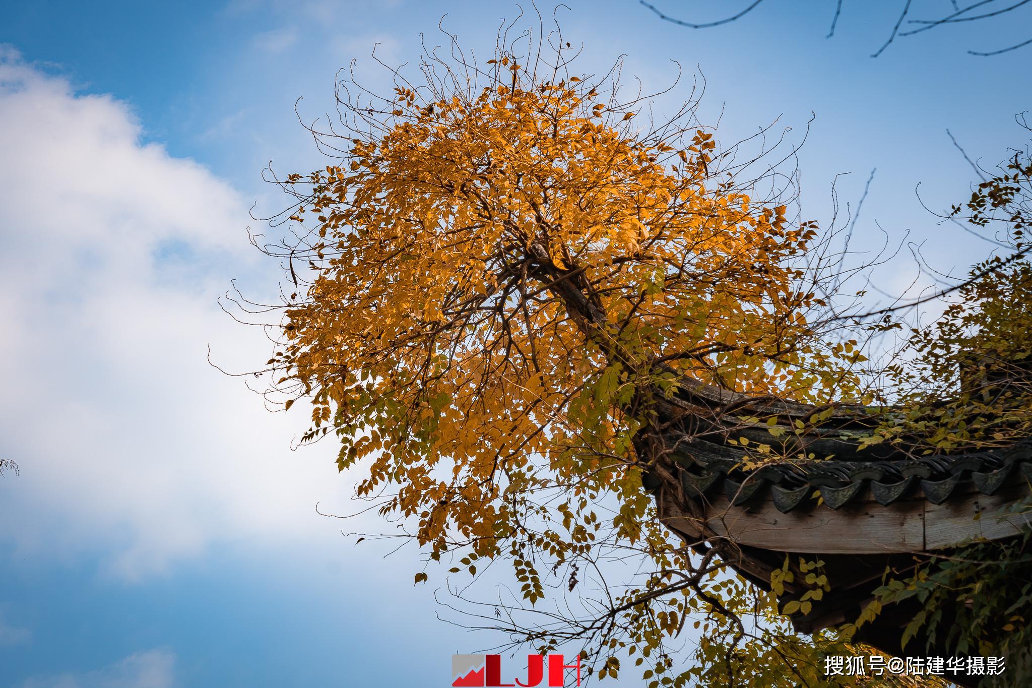 建于明朝的碧山吟社,是无锡现存最早的山际园林_秦金