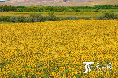 攝影師岳琦:一萬張照片愛上新疆