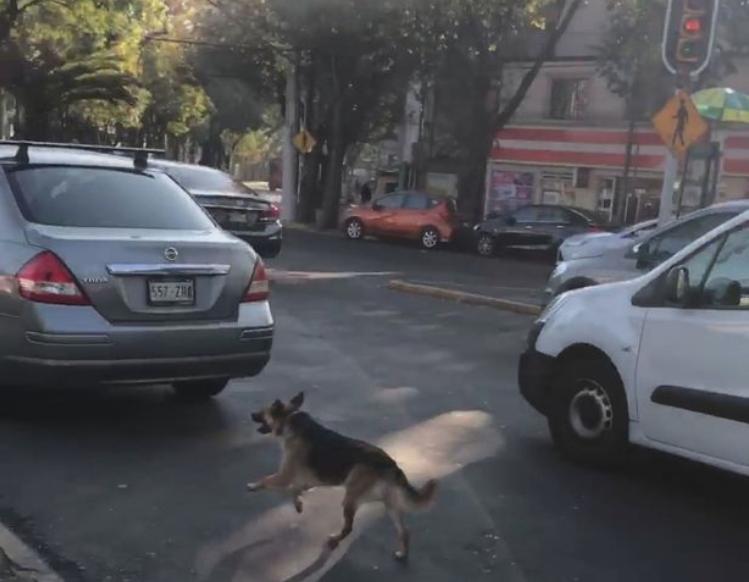 <b>墨西哥痴心忠犬当街遭遗弃 尾随主人汽车紧追不舍</b>