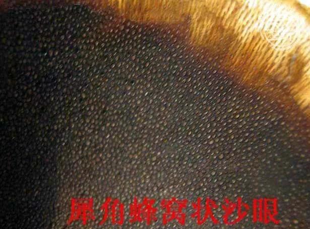 假披毛犀角是什么做的?怎么分辨披毛犀角制品?【披毛犀角真假辨别】 网络快讯 第8张