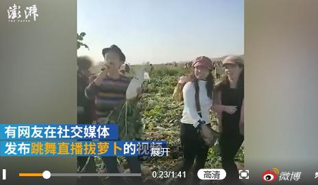 神吐槽:百亩萝卜被谣传免费遭哄抢,造成近30万损失,这是占便宜还是抢劫?