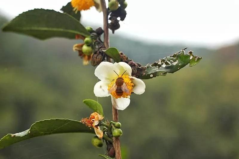 饮茶作用的五个时期和饮茶发展的三大阶段_茶叶