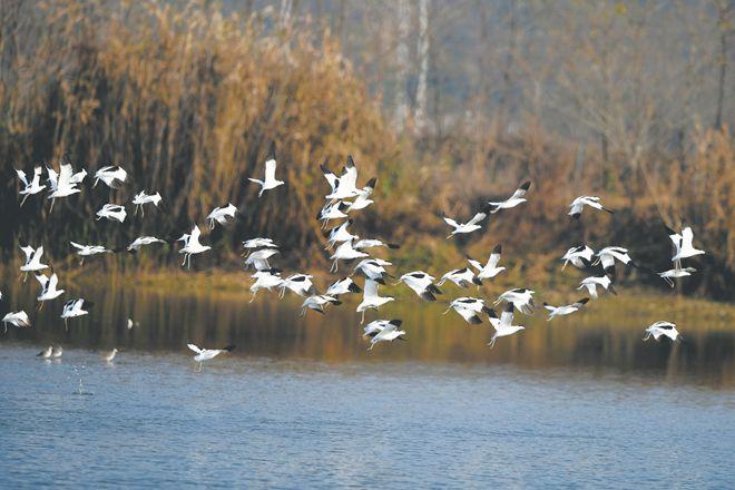 合肥立法保护环巢湖十大湿地