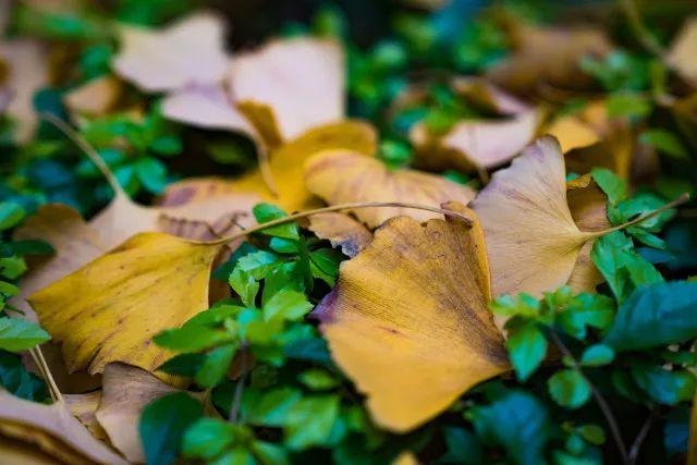 赏秋叶,泡温泉,重庆主城这座山,承包了初冬的一切美好