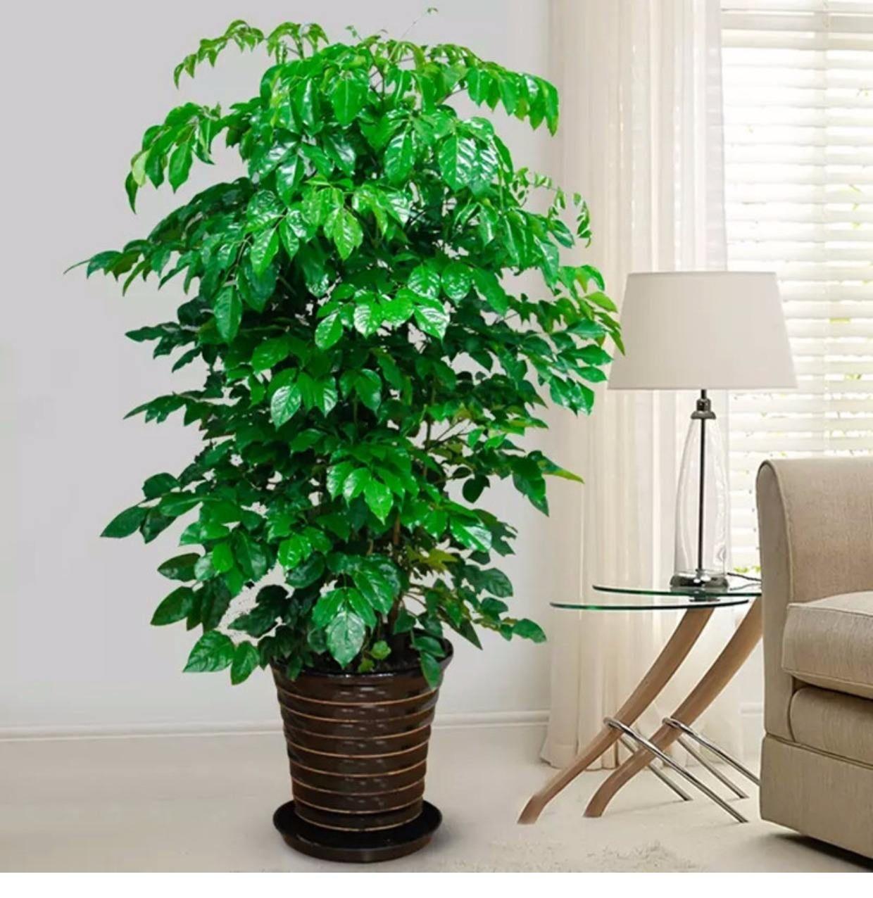 花卉绿植图片