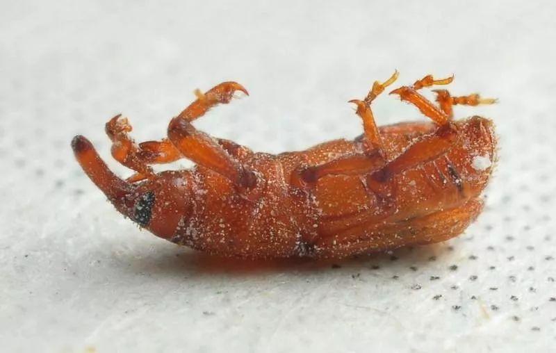 生虫的原理_认识了苏云金芽胞杆菌的灭虫原理,小编就想,既然植物生了虫,可以用苏云金芽胞杆菌来进行生态灭杀,那么我们人类身体感染的寄生虫,是否可以