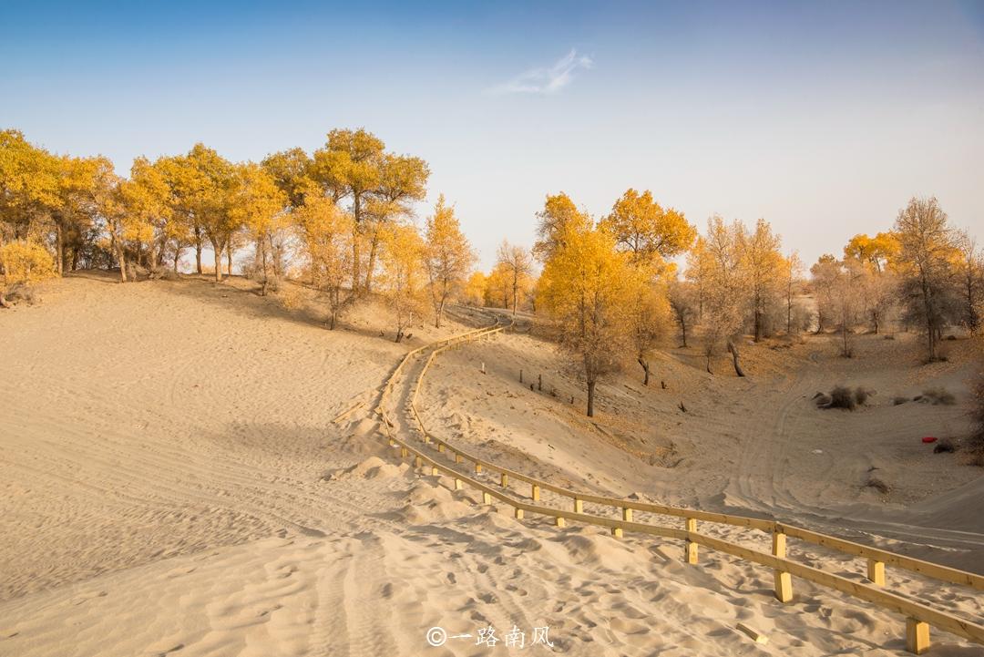 新疆有种奇树,千年不死,千年不枯,景色太梦幻了!