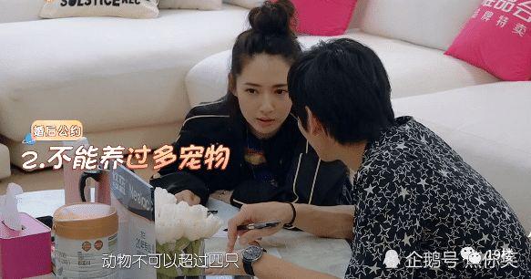 烟台32岁鹦鹉因在家里养了两只地址男子,被妻杭州红蚂蚁装饰虎皮图片