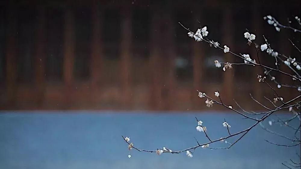 禹洲·凤凰府丨初冬雪落,府院大成
