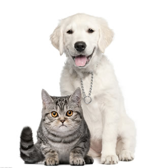 中国宠物医疗放射影像技术领跑者:武汉佳影宠物DR