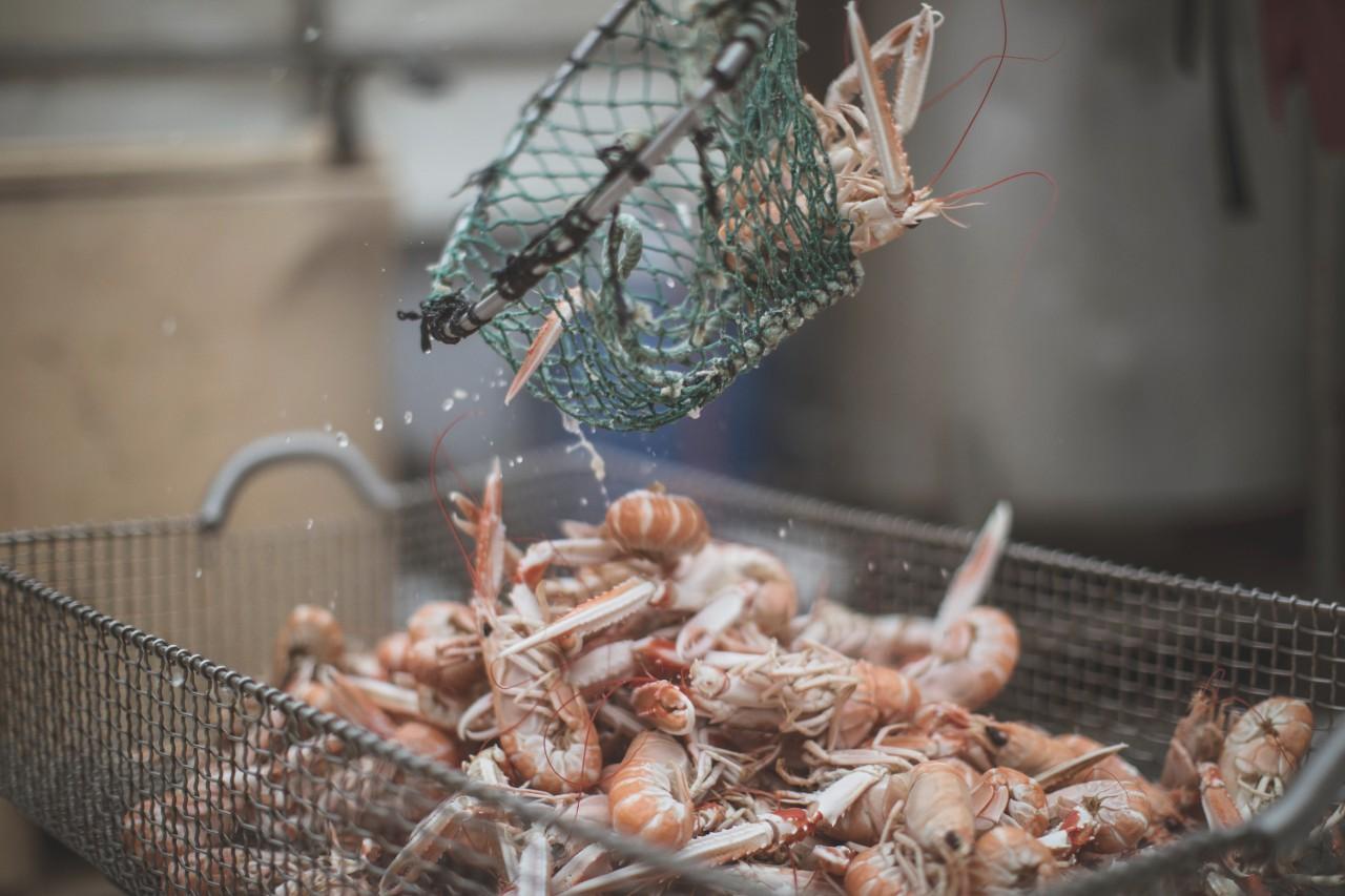 瑞典西海岸美食攻略 - Hönö避世小岛