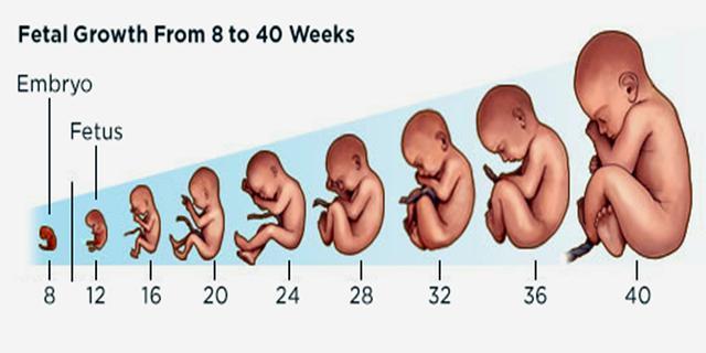 同样是足月儿,孕37周和40周出生的宝宝,差别不止一点点