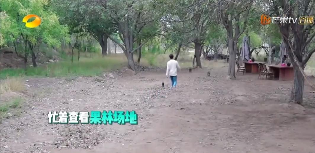 """《客栈3》张翰愤然离场,是什么让下饭综艺成""""吃不下饭""""综艺?"""
