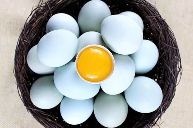 <b>绿壳鸡蛋和土鸡蛋有什么区别,营养更好吗?很多人不知道,涨知识</b>
