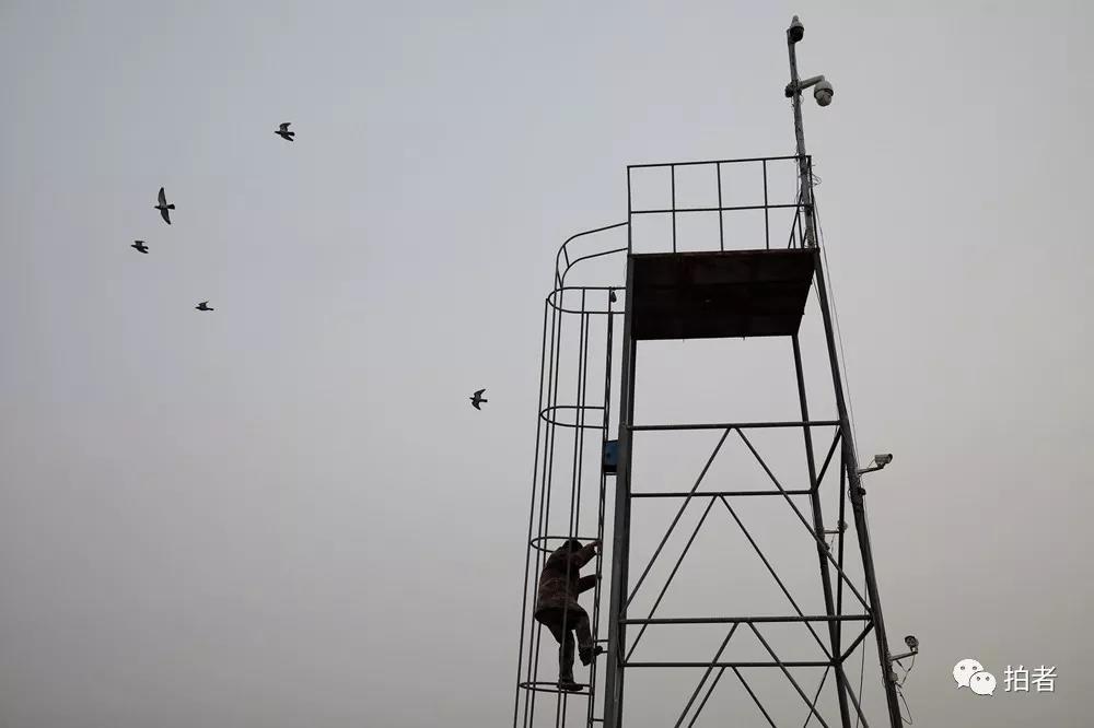 """一个人的救助站:35亩荒地上建起候鸟的""""诺亚方舟"""""""