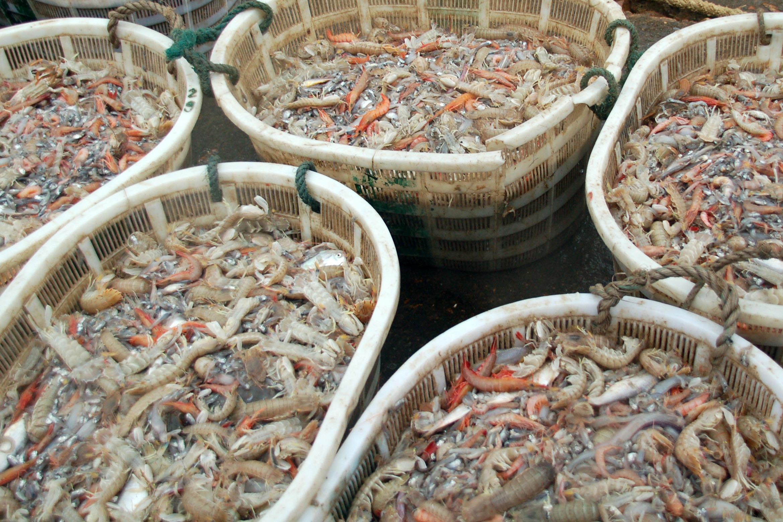 这就是你们平时吃的皮皮虾,这里到处都是,最低只要3块钱一斤
