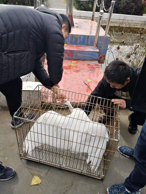 东王集派出所救助一只国家二级保护动物