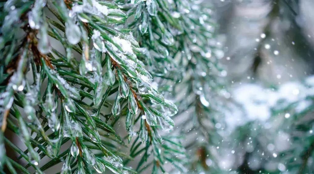 大雪节气过后,如何正确给苗木浇灌防冻水?