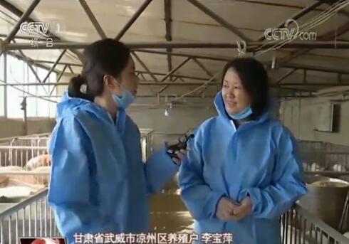猪肉保供稳价成效如何?记者深入调研生猪养殖现状