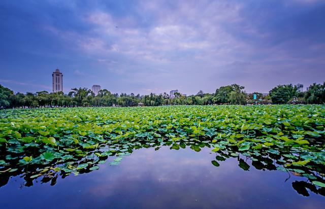 原创             昆明市中心最美的免费公园,冬季来这里看红嘴鸥