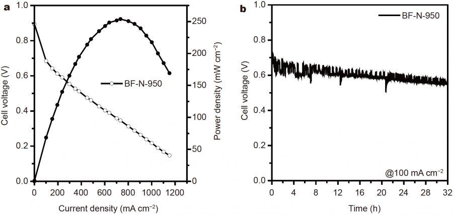 利用黑木耳合成高性能氢氧燃料电池氧还原催化剂