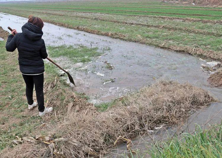 大荔开足马力抗旱冬灌,20万亩庄稼都喝饱了!