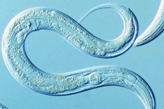 <b>Nature子刊:改变一个基因即可延长30%寿命,人类寿命的极限在哪里?</b>