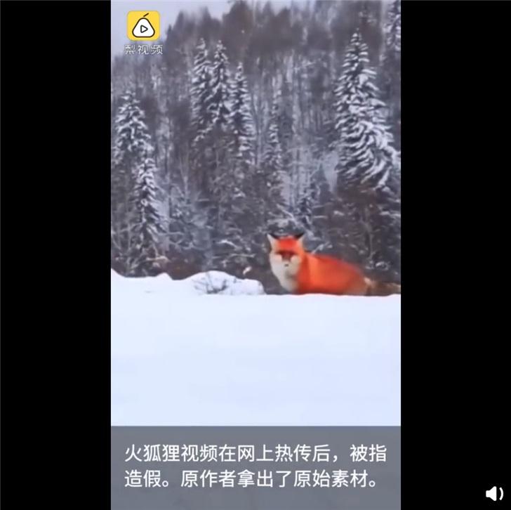 """網絡傳播""""大興安嶺火狐貍""""視頻為PS調色處理,造假者現身致歉"""