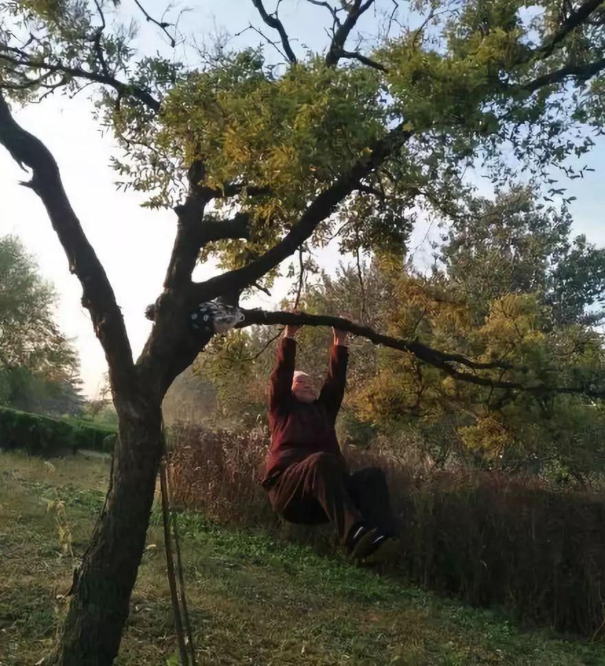 <b>中国大妈喜欢挂在树上,跟老外解释不清了</b>