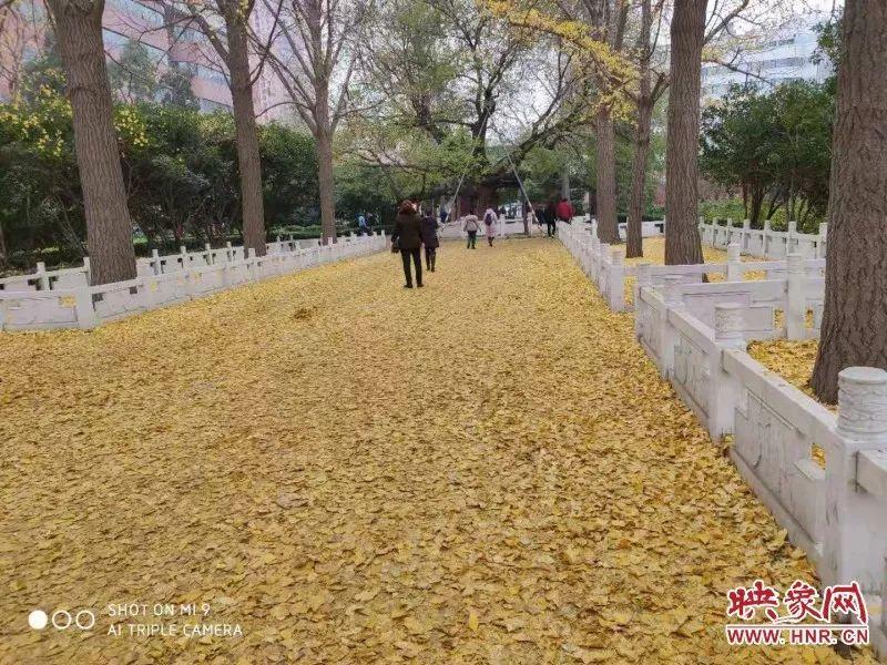 """美翻了!郑州人民公园""""不扫落叶"""",造了郑州最美的一条路"""