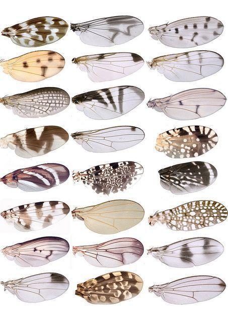 翼样 昆虫翅膀绘画参考 网友称 想不到昆虫的翅膀这么好看