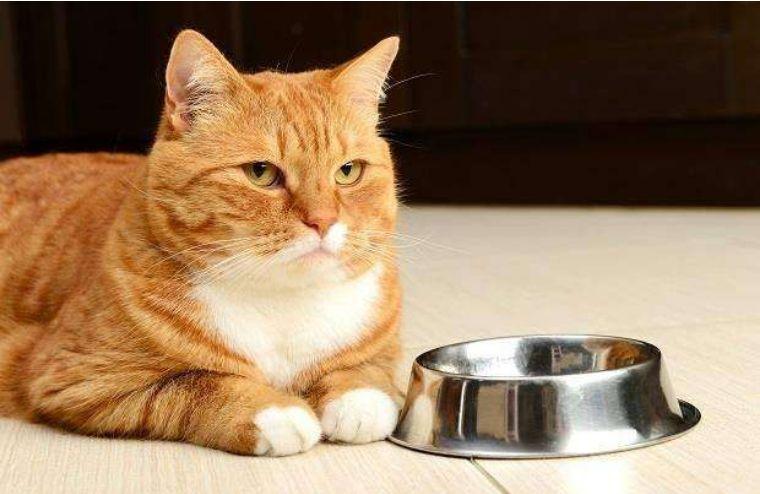 猫咪胃口大增正常吗图片