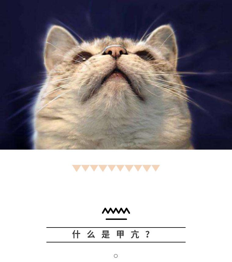 猫咪死前一天的症状图片