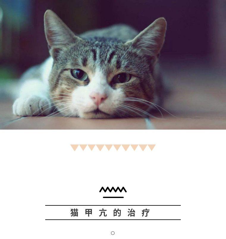 猫咪十大常见疾病图片