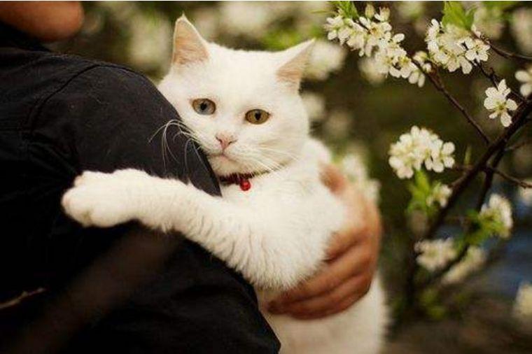 猫咪严重疾病图片