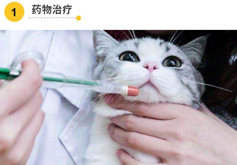 猫咪炎症图片
