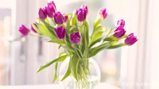 测试:你最喜欢哪一瓶花?测测你败不败家?