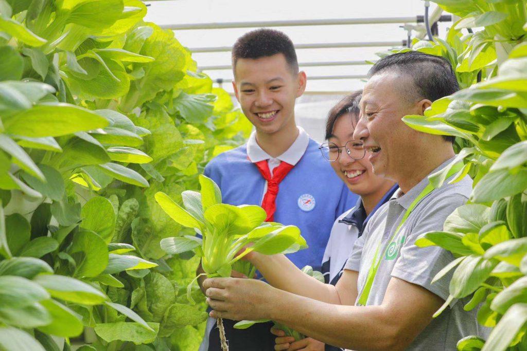 海卓生物科技:无土栽培、智能管控,城市的阳台楼顶都能变成小菜园