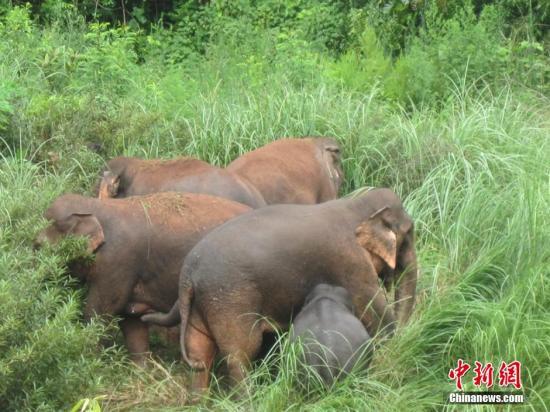 国家林草局亚洲象研究中心落户云南