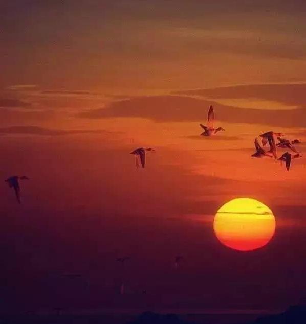 幸福的生活不过是:心中有风景,眼里无是非!