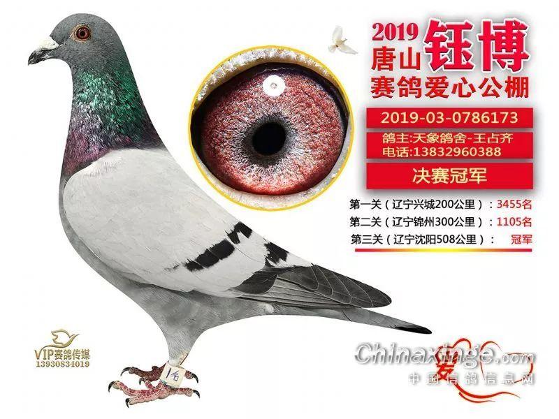正在直播:唐山钰博公棚决赛获奖鸽拍卖会