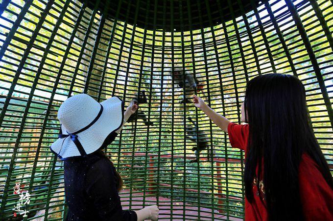 原创             海南小众旅游地,陵水南湾猴岛,世界唯一的岛屿型猕猴自然保护区