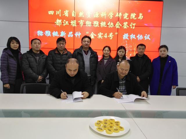 """四川省自然资源研究院与都江堰市猕猴桃协会签订""""金实4号""""授权协议"""