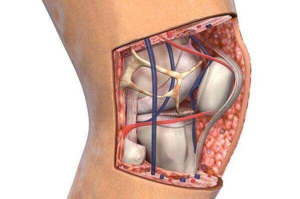 搜狐科学|保护膝盖有多重要?膝盖受伤可致骨关节炎发病风险提高六倍