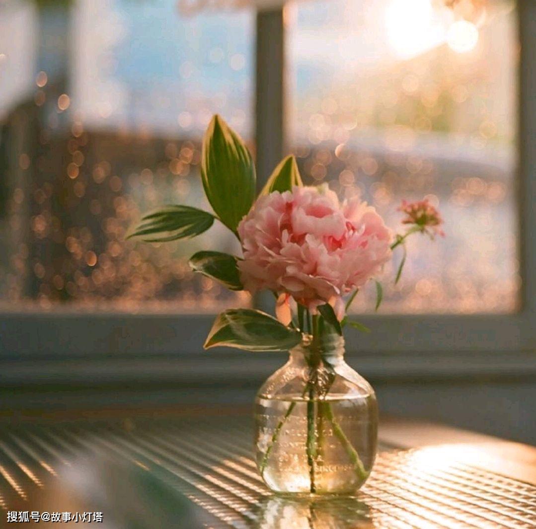 唯美头像花朵图片大全