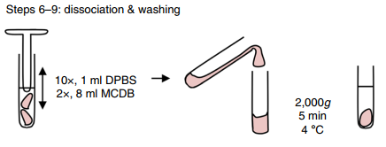 脑微血管的分离与分子鉴定