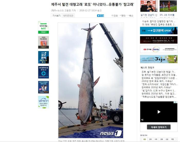 韩国济州岛海上发现保护物种巨鲸尸体 身长逾十米