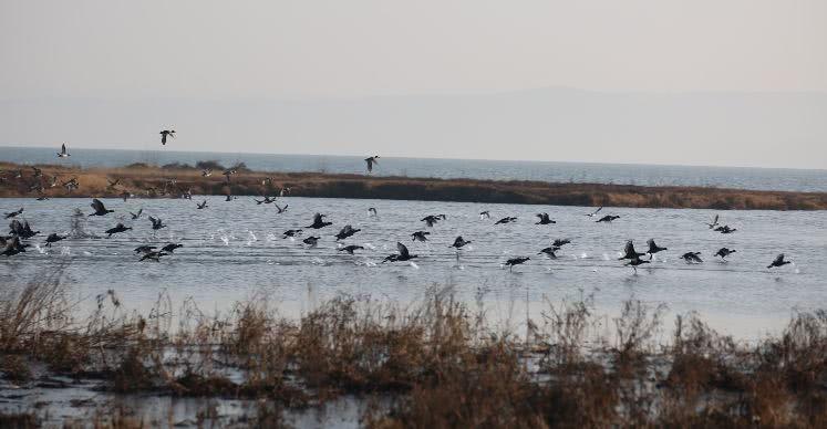 """厉害了!嵩县陆浑湖正式获批""""国家湿地公园""""!"""