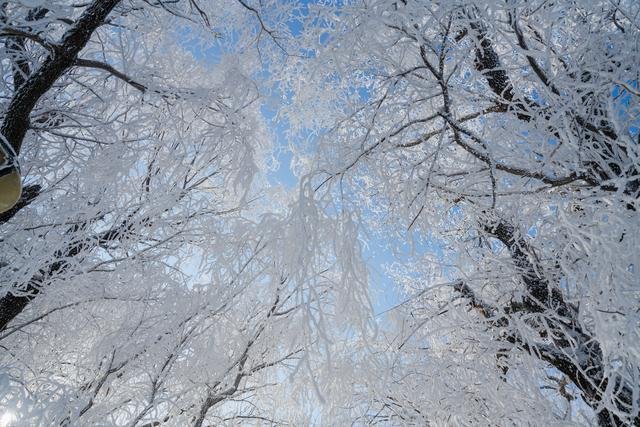 非冰非雪,带娃儿去人间仙境赏最美雾淞