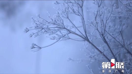 赏雾凇 观冰挂 许你一场冰雪奇缘